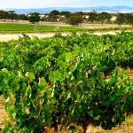 vineyard1_1280px