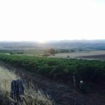 awri-blog-19022015-photo-2a