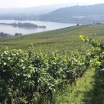German-vineyard-360px