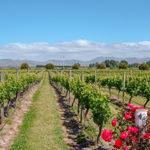 vineyard-4081322_1920