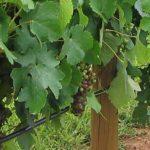 vineyard-soil-3-1280×300