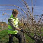Nick pruning